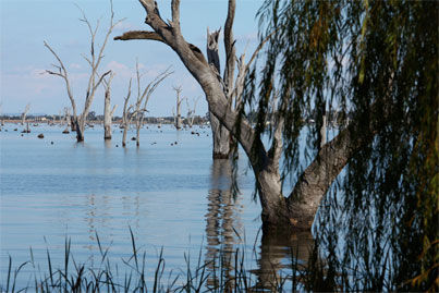 Lake Mulwala Flooded Trees